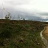 Pantalla vegetal en parque eólico