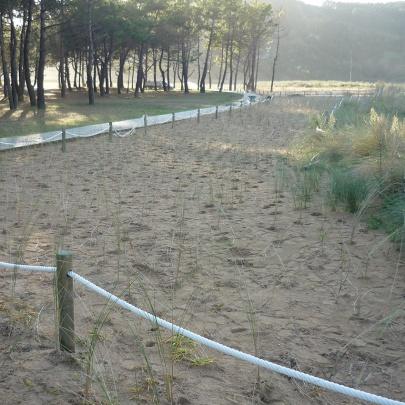 Plantación en ambiente dunar