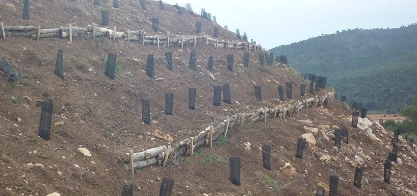 Plantación con minibancales