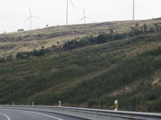 Hidrosiembra arbustiva después de tres años en talud de autopista
