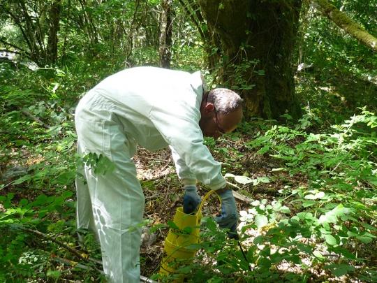 Tratamiento químico en espacio natural (Robinia pseudoacacia)
