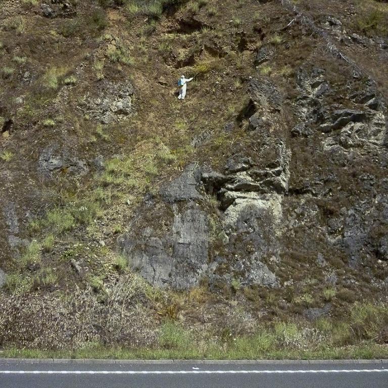 Tratamiento químico en talud de carreteras (Buddleja davidii)