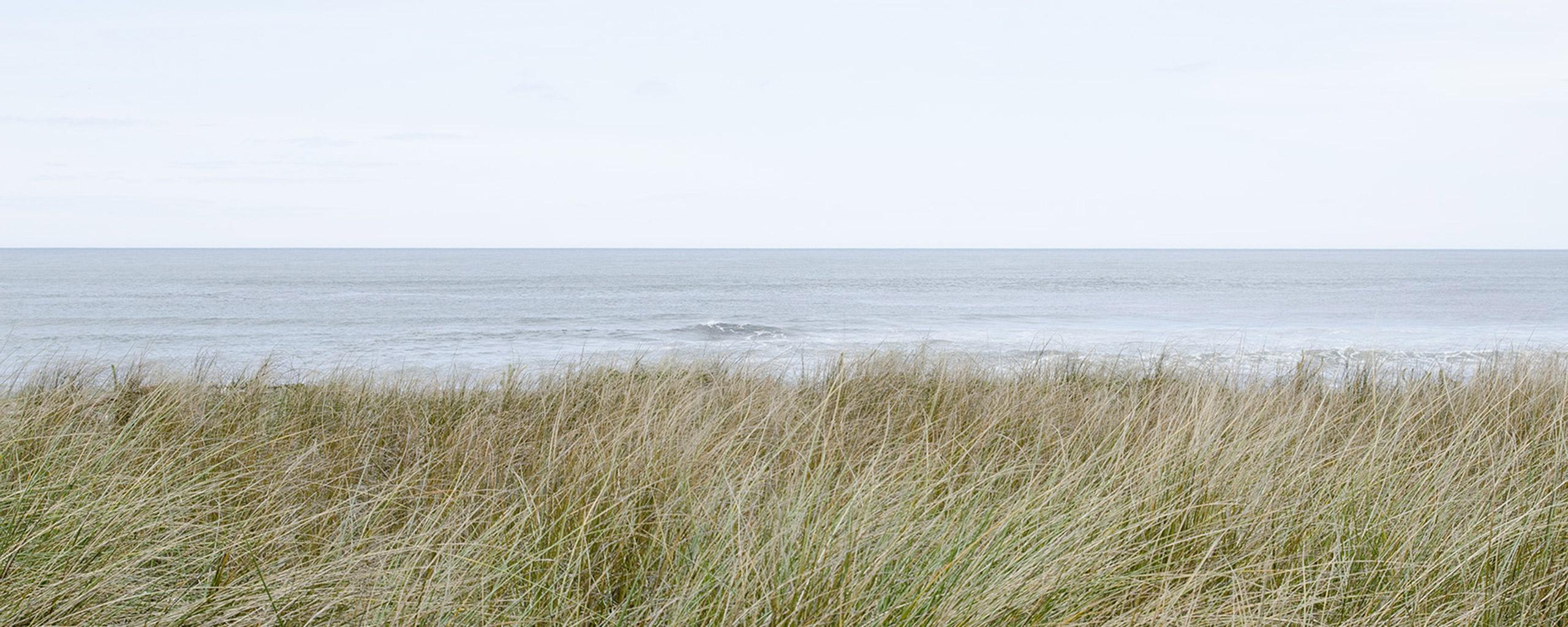 Revegetación mediante plantación en duna de playa